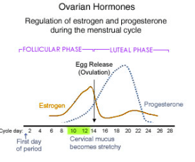Ovarian Hormones Monthly Cycle