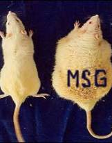 Rats_Fed_MSG_Obesity Grocery Store as Minefield Child_shopping_cart2