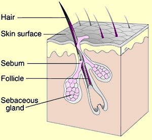 Hair_Follicle_Pantothenic_acid_b5_acne