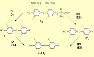 Iodothyroninedeiodinase