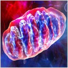 Mitochondria99