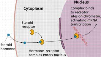 steroid_receptor