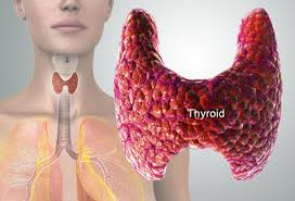 Thyroid Gland 99