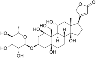 Preventing Heart Attacks with Ouabain