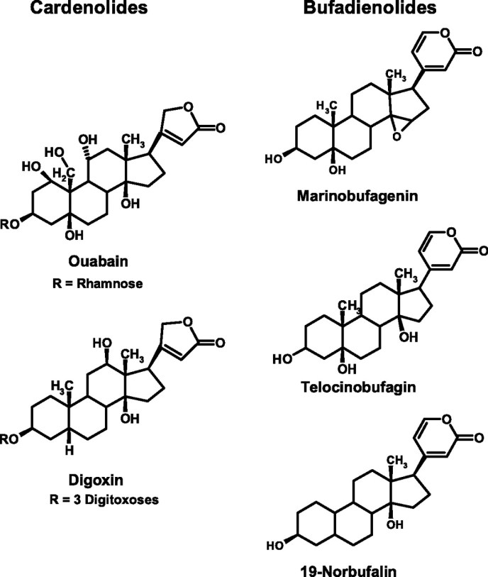 Ouabain_Digoxin_Marinobufagenin_cardiac_glycosides