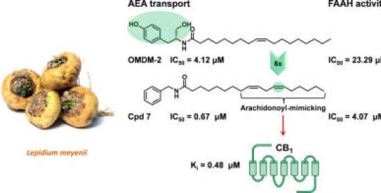 Image_Endocannabinoid Modulating Alkylamides Lepidium meyenii MACA Zsanett Hajdu J Nat Products 2014