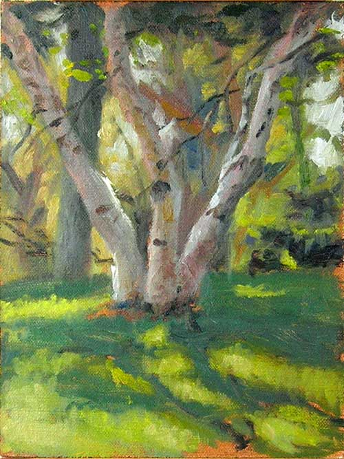 Birch Tree Trio | Jeffrey Smith