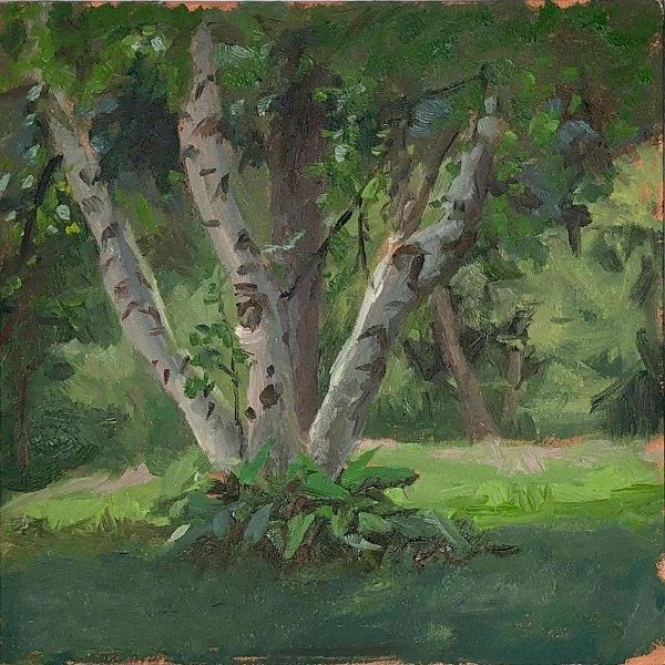 Birch Trees   Jeffrey Smith