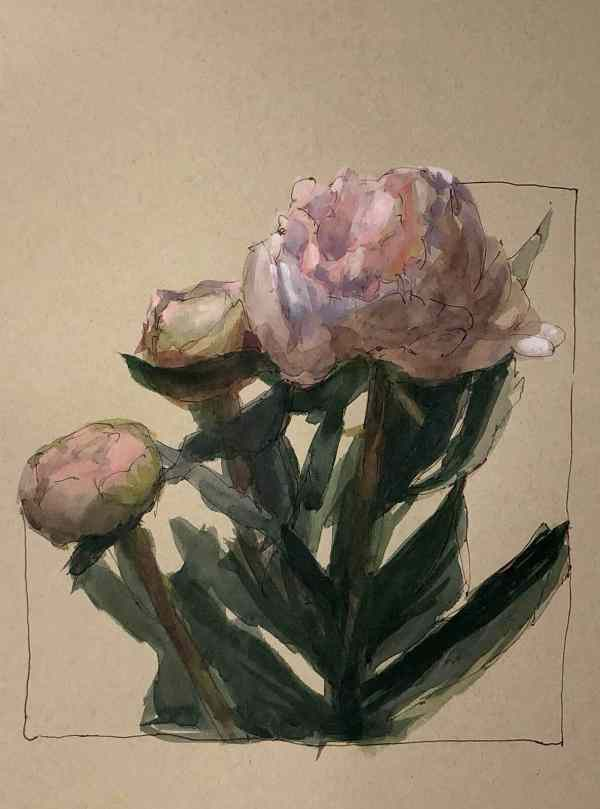 A watercolor painting of peonies on tan paper by Jeffrey Smith
