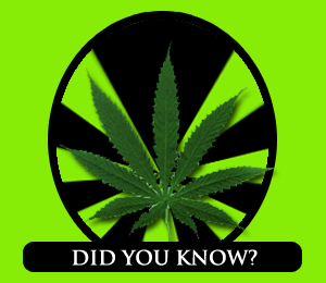 Marijuana-Facts-and-Statistics