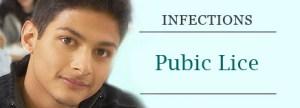 public lice_01