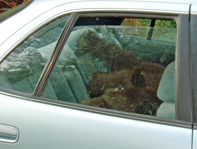 Blue 1 asleep in car