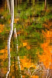 Autumn Reflections