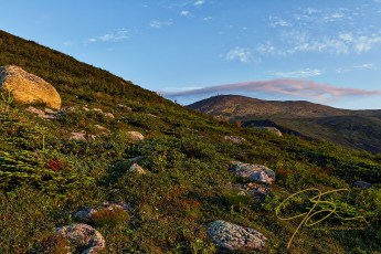 Early Light On The Boott Spur Trail