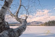birch_tree_at_chorocua_lake_winter_0992-Edit