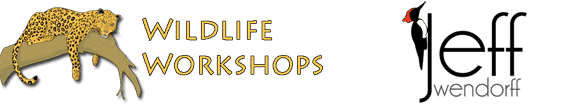 Jeff Wendorff Wildlife Workshops Logos