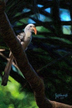 Bird Art - Red-billed Hornbill painting created by Jeff Wendorff