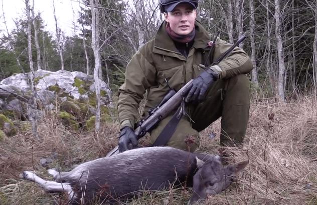 Video: Dåhjort jakt i Sverige