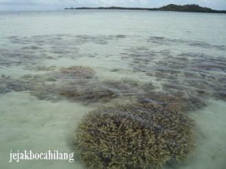 terumbu karang dekat Gosongan