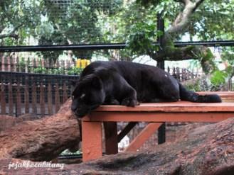 Panter di Batu Secret Zoo