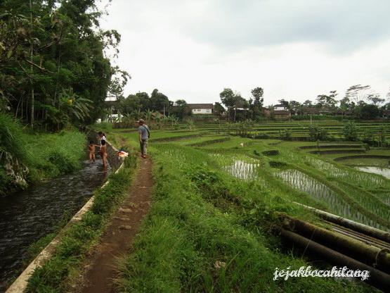 jalan sawah menuju Candi Sumberawan