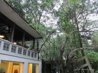 pohon rindang di luar museum