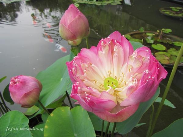 Taman Lotus di The Breeze
