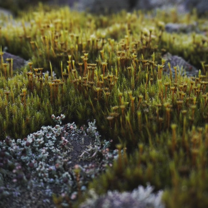 tanaman paku-pakuan di lereng Gunung Merapi