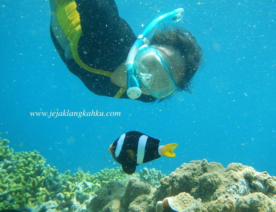 snorkeling menjangan island bali underwater diving