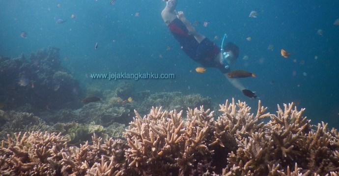 wisata pulau seribu beach pantai koral ikan