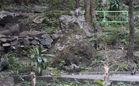 monyet di coban rondo malang 1