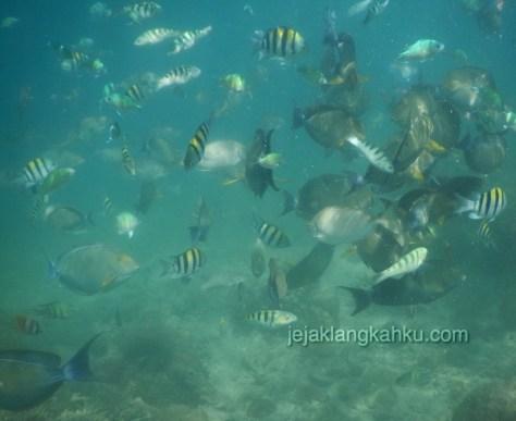gili nanggu lombok 7