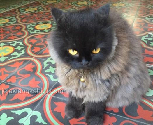 kucing phi phi thailand 1
