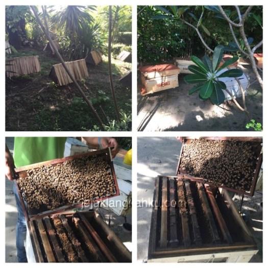 big bee phuket 3-1