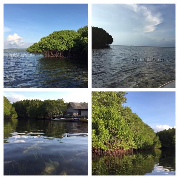 mangrove forest nusa lembongan 2