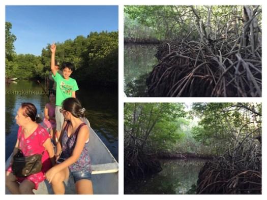 mangrove forest nusa lembongan 5