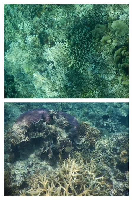 snorkeling pulau putri d