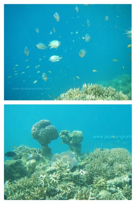 snorkeling pulau sepa d