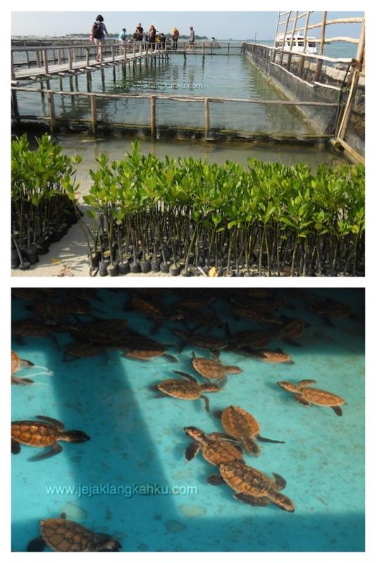 taman biota pulau harapan c