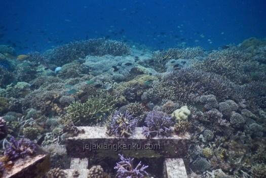 underwater-gili-bidara-lombok-0