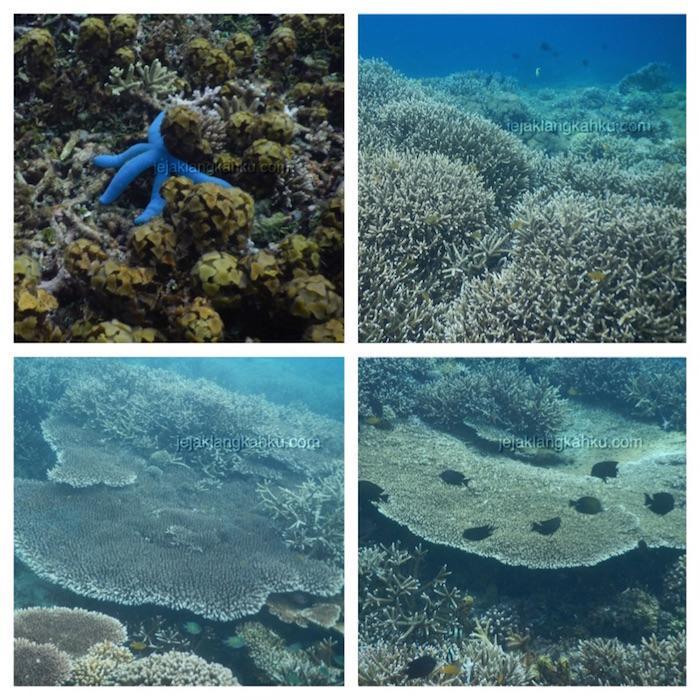 underwater-gili-bidara-lombok-1