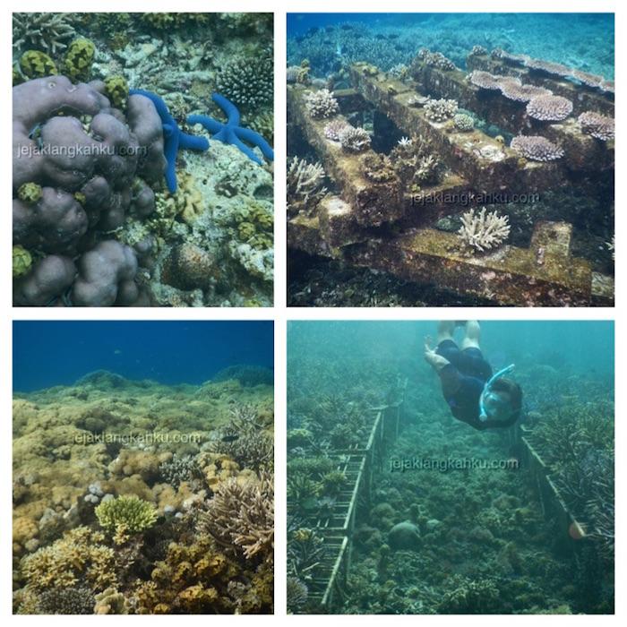 underwater-gili-bidara-lombok-3