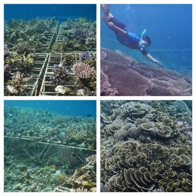 underwater-gili-bidara-lombok-4
