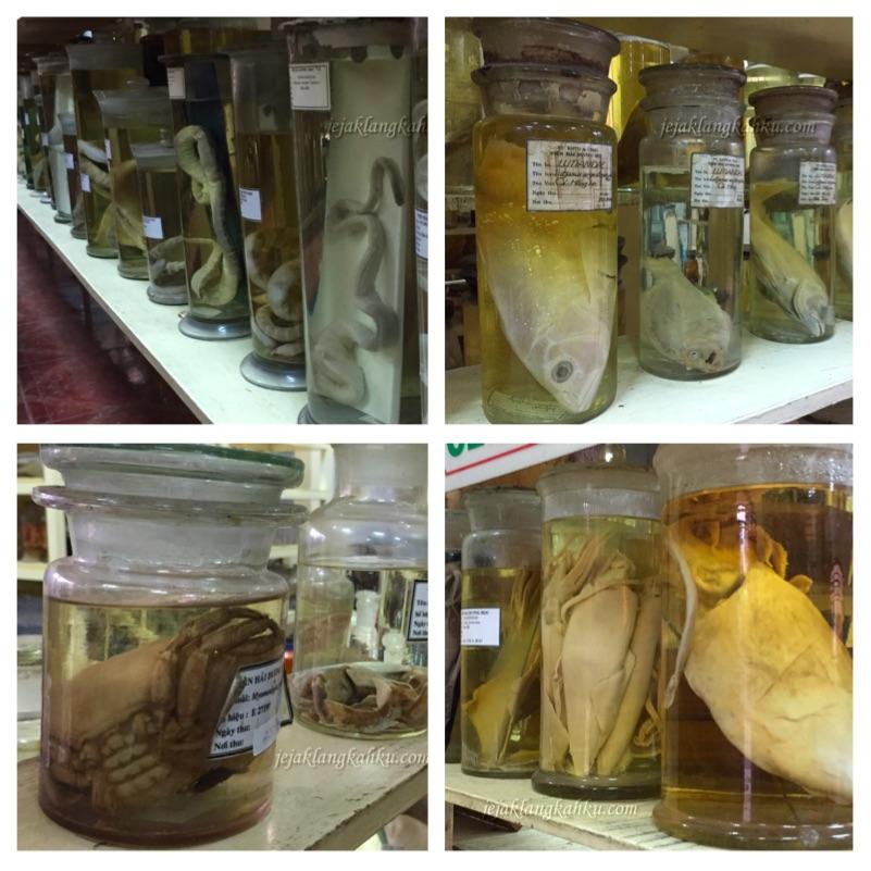 oceanographic museum vietnam 3