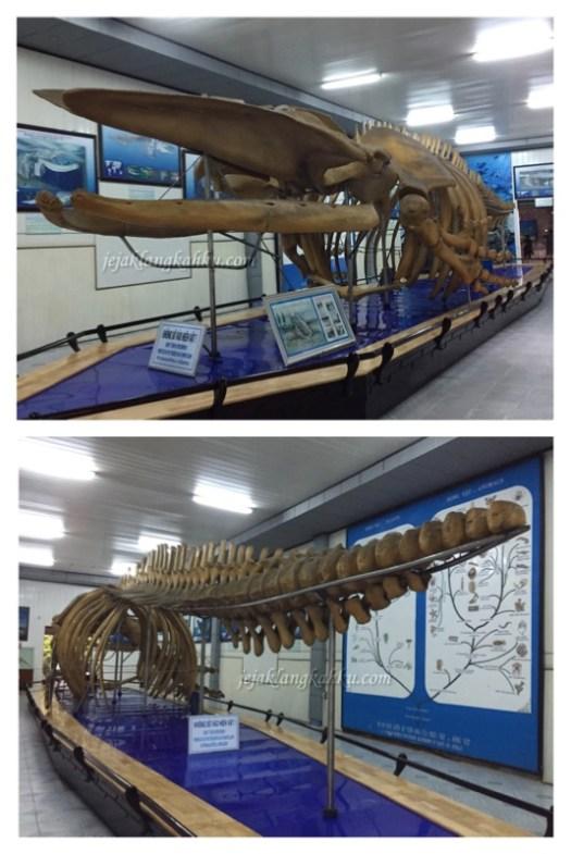 oceanographic museum vietnam 4