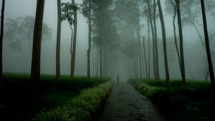 kabut tebal di jalanan perkebunan teh lawang