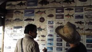 variouse of fish at Tonle Sap lake