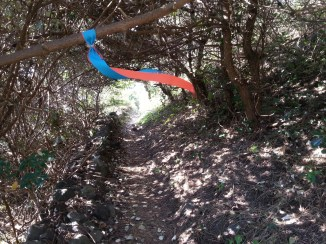 Jeju-Olle-Trail-Typical-View-Ribbon blowing on forest path