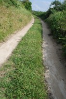 Jeju-Olle-Trail-Typical-View-Sandy Path Route 19