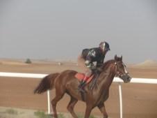 Skilled jockeys
